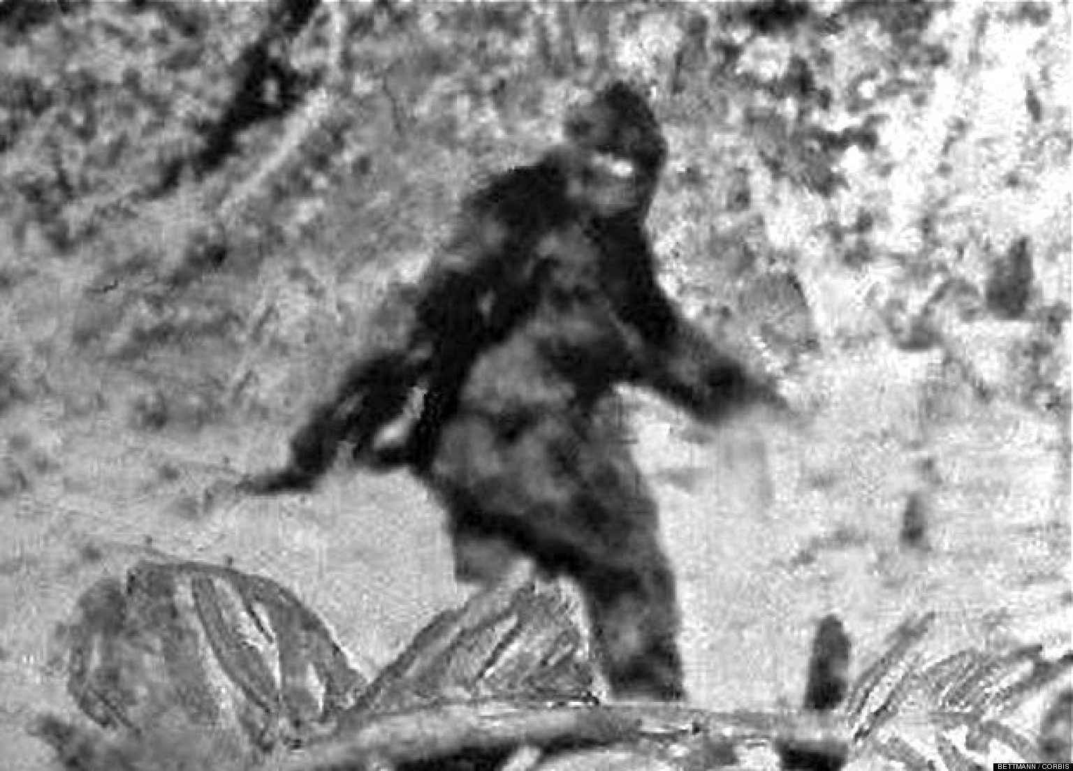 Is There Any Proof that Bigfoot Is Real?
