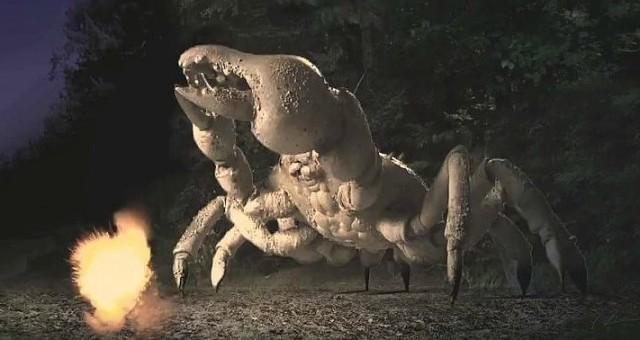 Queen Crab5