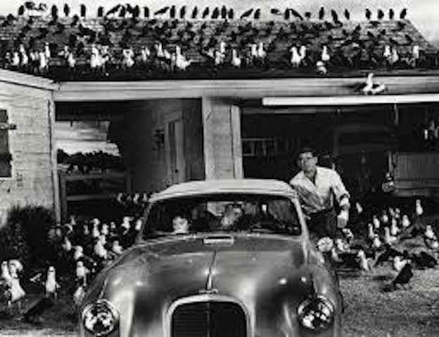 Iconic birds